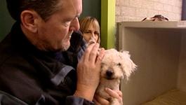 Dierenpolitie Dierenpolitie (voorjaar 2007)