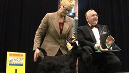 De Beste Hond Ter Wereld - Aflevering 2