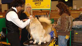 De Beste Hond Ter Wereld - Aflevering 5