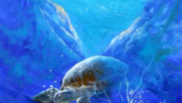 Schilderen Met Gary Jenkins - Zeeschildpad - Schilderen Met Gary Jenkins