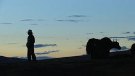 Summer Pasture - Summer Pasture