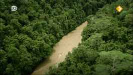 Expeditie Nieuw-guinea - Natuur Op 2: Expeditie Nieuw-guinea
