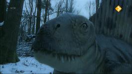 De Buitendienst Van Nieuws Uit De Natuur - Fossielen En Dino's