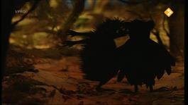 Verhalen Van De Boze Heks - Spookhemd