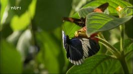 Natuur op 2: How nature works Regenwouden