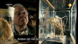 David Attenborough's Rariteitenkabinet - Verdraaid Goed