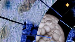 Labyrint TV Nieuw licht op de biologische klok