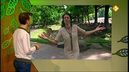 De Buitendienst Van Nieuws Uit De Natuur - De Olifant
