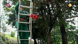 Kijk Het Vaticaan - De Tuinmannen Van De Paus