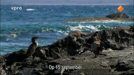 Beagle, In Het Kielzog Van Darwin - Galapagos: Laboratorium Van De Evolutie