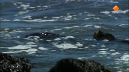 Beagle, In Het Kielzog Van Darwin - Galapagos: Paradijs Voor Zakenlui, Smokkelaars En Christenen