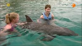 Zoovenirs - Zoovenirs: Zwemmen Met Dolfijnen