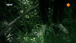 Het Uur Van De Wolf - Low, You May Need A Murderer