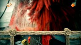 Hollandse Vissers - Kleine Schepen, Grote Schepen