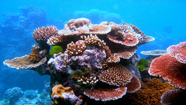 Klimaatjagers - Oceanië