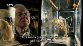 David Attenborough's Rariteitenkabinet Lekker lang