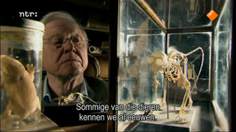 David Attenborough's Rariteitenkabinet - Leve De Rimpels