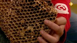 De Buitendienst Van Nieuws Uit De Natuur - Wespen