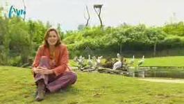 Dierenpark - Zoo Parc Overloon En Marineland In Zuid-frankrijk.