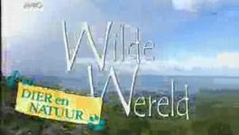 Anniko's Wilde Wereldreizen - Suriname.