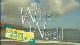 Anniko's Wilde Wereldreizen - Californië (1).