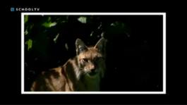 De Buitendienst Van Nieuws Uit De Natuur - Roofdieren? Natuurlijk!