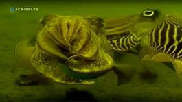De Buitendienst Van Nieuws Uit De Natuur - Leven In De Zee
