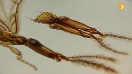 De Buitendienst Van Nieuws Uit De Natuur - Insecten: Vliegen