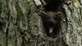 De Buitendienst Van Nieuws Uit De Natuur - Zoogdieren