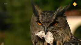 De Buitendienst Van Nieuws Uit De Natuur - Vogels In De Winter