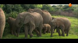 Freek In Het Wild - Verdoofde Olifant