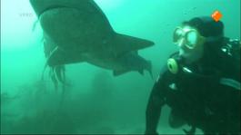 Freek In Het Wild - Blauwe Haaien
