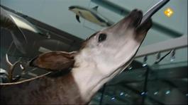 Het Klokhuis - Prehistorische Dieren