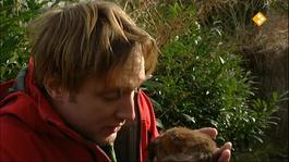 Het Klokhuis - Dieren Bewaren
