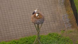 Nederland Van Boven - Nest