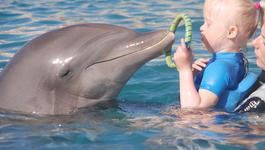 `t Zal Je Maar Gebeuren - Emma Krijgt Hulp Van Dolfijnen