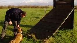 Het Politiebureau - De Hondengeleiders En De Hennepkwekerij