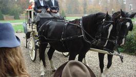 Elly En De Wiebelwagen - Lintje Van De Koningin