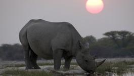 Africa - Africa (1) - De Kalahari