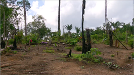 Zapp Your Planet: Expeditie 2014 - Aflevering 3: Expeditie Suriname