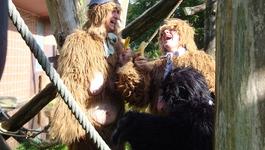 Elly En De Wiebelwagen - De Apenfruitmand