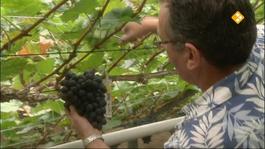 Het Klokhuis - Druiven