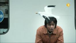 Het Klokhuis - Wadvogels