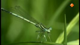Nature's Microworlds - Insecten, Het Geheim Van Hun Succes