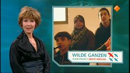 Wilde Ganzen - Wilde Ganzen