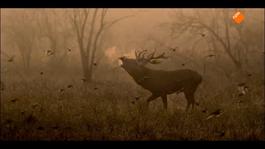 De Nieuwe Wildernis De nieuwe wildernis: Overleven
