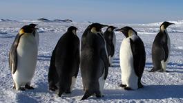 Penguins - Spy In The Huddle - Maandag 1/3: Aankomst