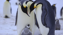 Penguins - Spy In The Huddle - Dinsdag 2/3: De Eerste Stapjes