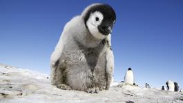 Penguins - Spy In The Huddle - Woensdag 3/3: Groot Worden