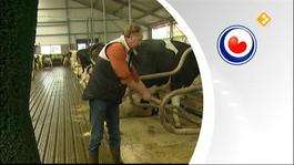 Fryslân Dok - Fryslân Dok: Boer Zonder Grenzen 5
